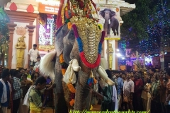 Decorated Elephant For Temple Festival