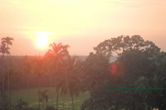 sunset on paddy fields
