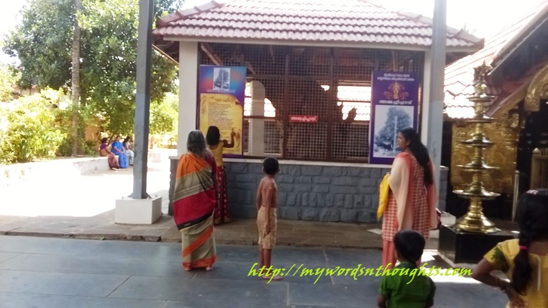 Significance of the famous Ammachi Plavu situated in Sree