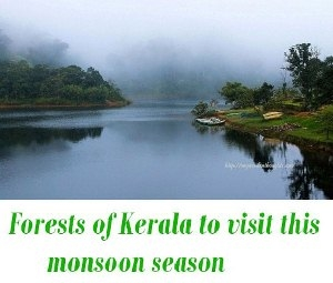 Forests of Kerala