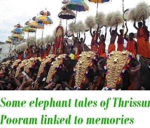elephant tales of Thrissur Pooram