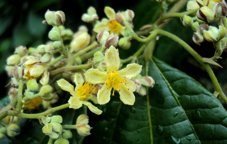 A Brief Note On Common Native Plants Of Kerala My Words Thoughts
